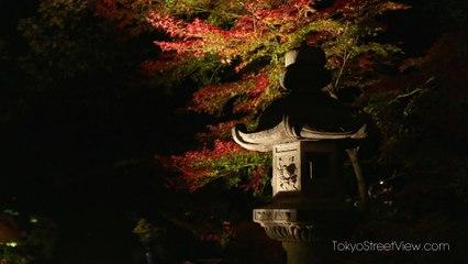 Tokyo Rikugien Parc la Nuit