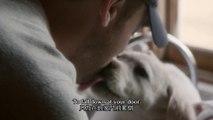 """BUDWEISER SUPERBOWL COMMERCIAL """"LOST DOG"""" #百威啤酒2015超級盃廣告《迷途萌犬》(中英字幕)"""
