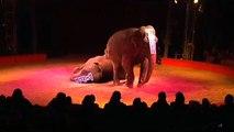 Le cirque Pinder va-t-il perdre ses éléphants ?