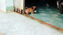 Cute Puppies Playing With A Ball