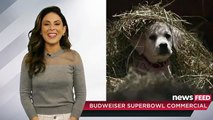 Budweiser  Lost Dog  Superbowl 2015 Commercial THE FEELS