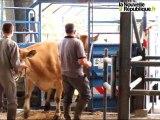 Parthenay : Festival de l'élevage et de la gastronomie 2011