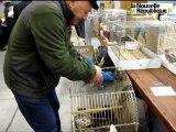 Niort : un éleveur de perroquets à la Bourse aux oiseaux