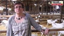 Fermes ouvertes : des écoliers visitent un élevage de chèvres