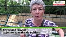 VIDEO. Poitiers l'ours Martha quitte le bois de St-Pierre pour le refuge de l'Arche