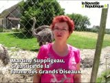VIDEO. Crucheray (41): à La ferme des Grands Oiseaux, on croise toutes sortes d'animaux