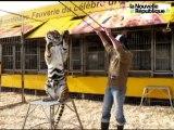 VIDEO : Dans la cage aux lions du cirque Pinder