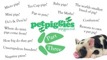 Micro, Mini & Tea Cup Pigs as Pets