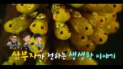 MBC 다큐스페셜 659회 20150209 극장판 곤충왕국 FULL HDTV MBC다큐스페셜 659화