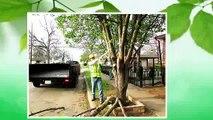Dallas Tree Services | 214-556-5079 | Dallas Tree Removal | Dallas Tree Trimming | DFW Tree Removal