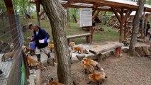 Japon - un village dédié aux renards