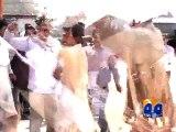 Pakistan beats India in bullfight before World Cup clash -Geo Reports-12 Feb 2015