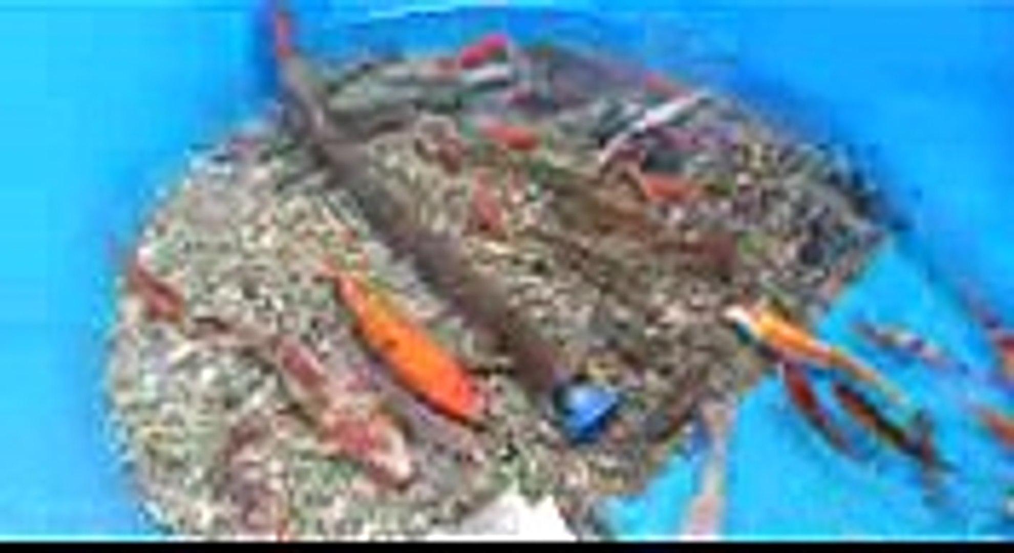 Tanque de peixes