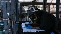 Super furry animals - Super Cute Animals: Preview - BBC One
