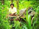 Ventajas que ofrecen los búfalos conquistan a los comerciantes ticos