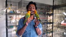 Sun Conure Self Feed Chicks of Syed Ovais Bilgrami