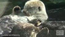 Des loutres amoureuses - compilation d'animaux trop mignons!
