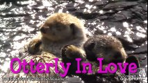 Cute otters in love... Adorable animal compilation!