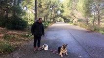 dressage canin la ciotat 13 travail de socialisation sur deux chiens
