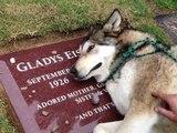 Un chien malheureux pour la mort de son maître #Zakch