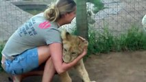 Waho, A young lady is getting mauled by two young lions