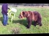 un ours trés drole