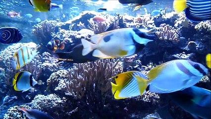 """Sortie Citizenkid : La BD """"Les animaux marins"""" à l'Aquarium Tropical Porte Dorée"""