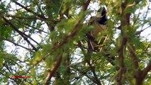 Squirrel Hunting with  22 Pellet Gun (Scope Cam) - video