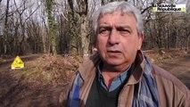 VIDEO. Poitiers. Débardage avec des bœufs dans les bois de Saint-Pierre