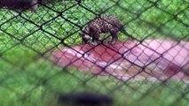 Nehru Zoological Park - Hyderabad - part 6