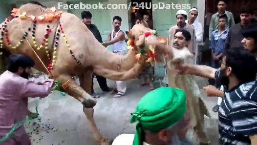 Curly Fries: Our Eid-ul-Adha!
