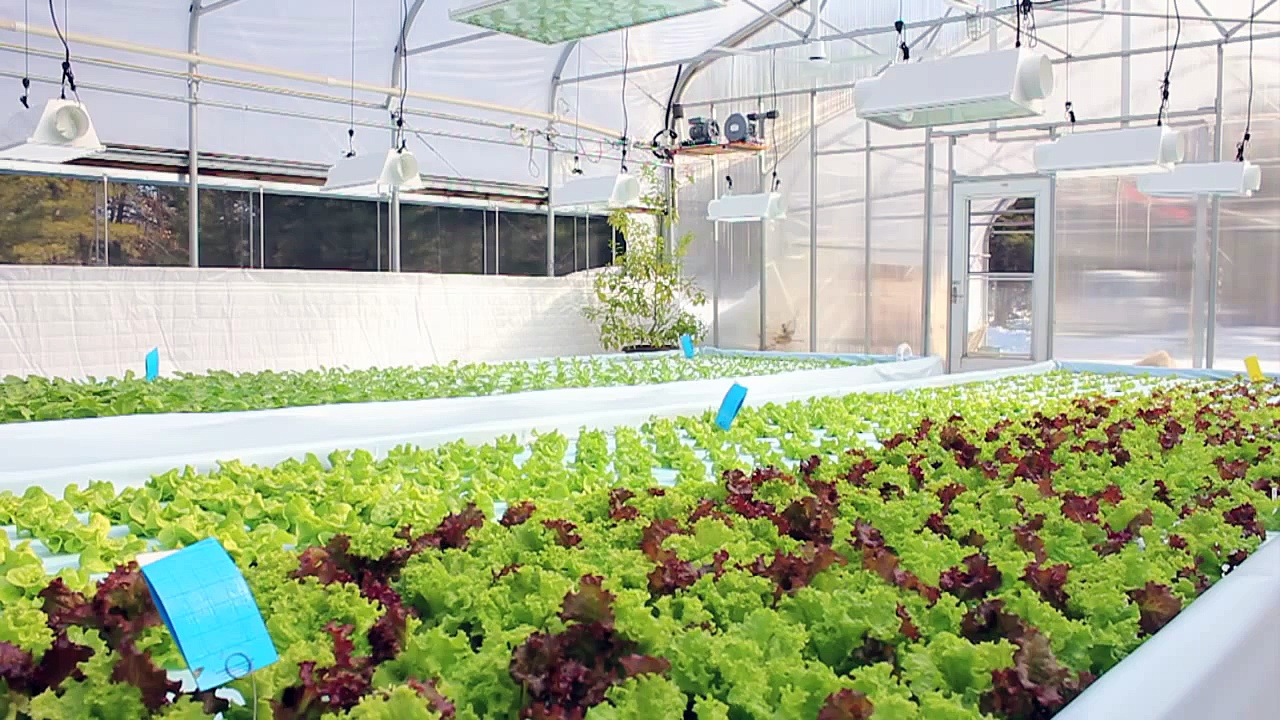 Nelson and Pade Aquaponics Master Class