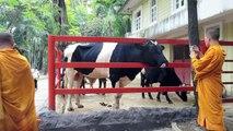 Dusit Zoo - Bangkok, Thailand Jan 2015