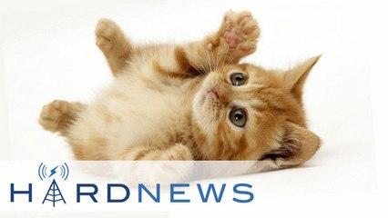 Hard News 01/15/14 - Catlateral Damage, Broken Age, and RBI Baseball revived