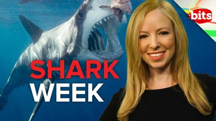 Shark Week Madness 2013, Twisted Sisters, and the Hillbilly Slide