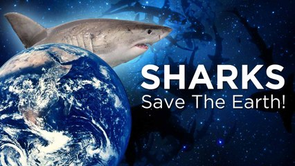 Sharks Evolved to Save the World