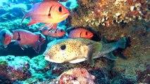 Sea Urchin Diving Mauritius Flic en Flac