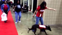 Tampa dog obedience training and trick demonstration . Sit Means Sit Dog Training.