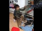 Prince the german shepard mix akita dog