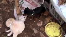komedi hayvanlar Şanslı sevimli köpek yavruları Lucky cute puppies video