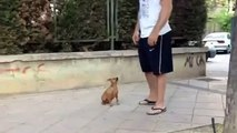 Bu Şirin Köpek B Komik Köpek Kedi Kuş Papağan Ördek Eşek Fare Hayvanlar İzle
