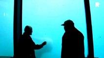 Polar Bear breaks window in zoo Aquarium