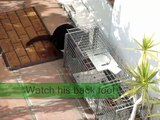 Cat Trapping, help from Fixnation.org TNR (Trap Neuter Release)