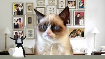 Psy Gentleman & Gangnam Style - Grumpy Cat Reaction