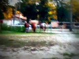 Horses First Time Meeting Jack the Donkey!! Must See For Animal/Horse Lovers