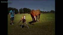 Cute Baby Animals Standing for the First Time and Taking First Steps Compilation  [HD VIDEO]