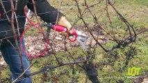 Salon de l'agriculture : médailles dans les vignes