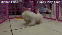 Havanese puppies for sale, Knoxville TN, NC, FL, NY, VA, SC