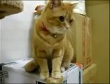 Cat goes crazy because of the Automatic Feeder... Hilarious pet!