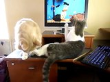 JUST STOP ! - Too Cute !! Cat uses extreme measures to stop brother's scratching !